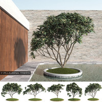 3d model 7 plumeria trees