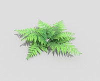 low poly fern