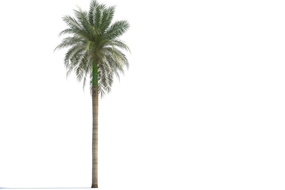 3d model palm veget