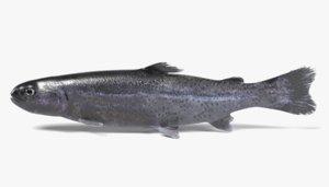 3d model trout