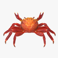 3d red rock crab rigged