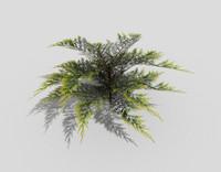 3d model shrub