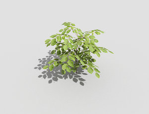 3d model of plant
