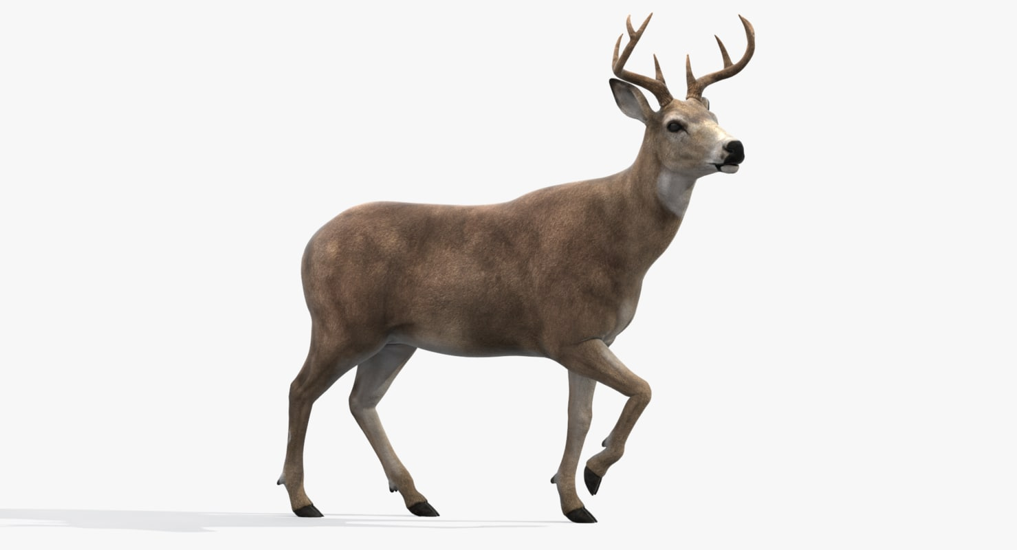 deer rigged max