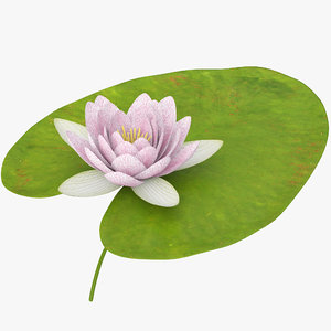 water lily animation 3d model