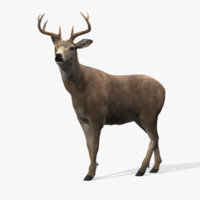 deer rigged fur 3d model
