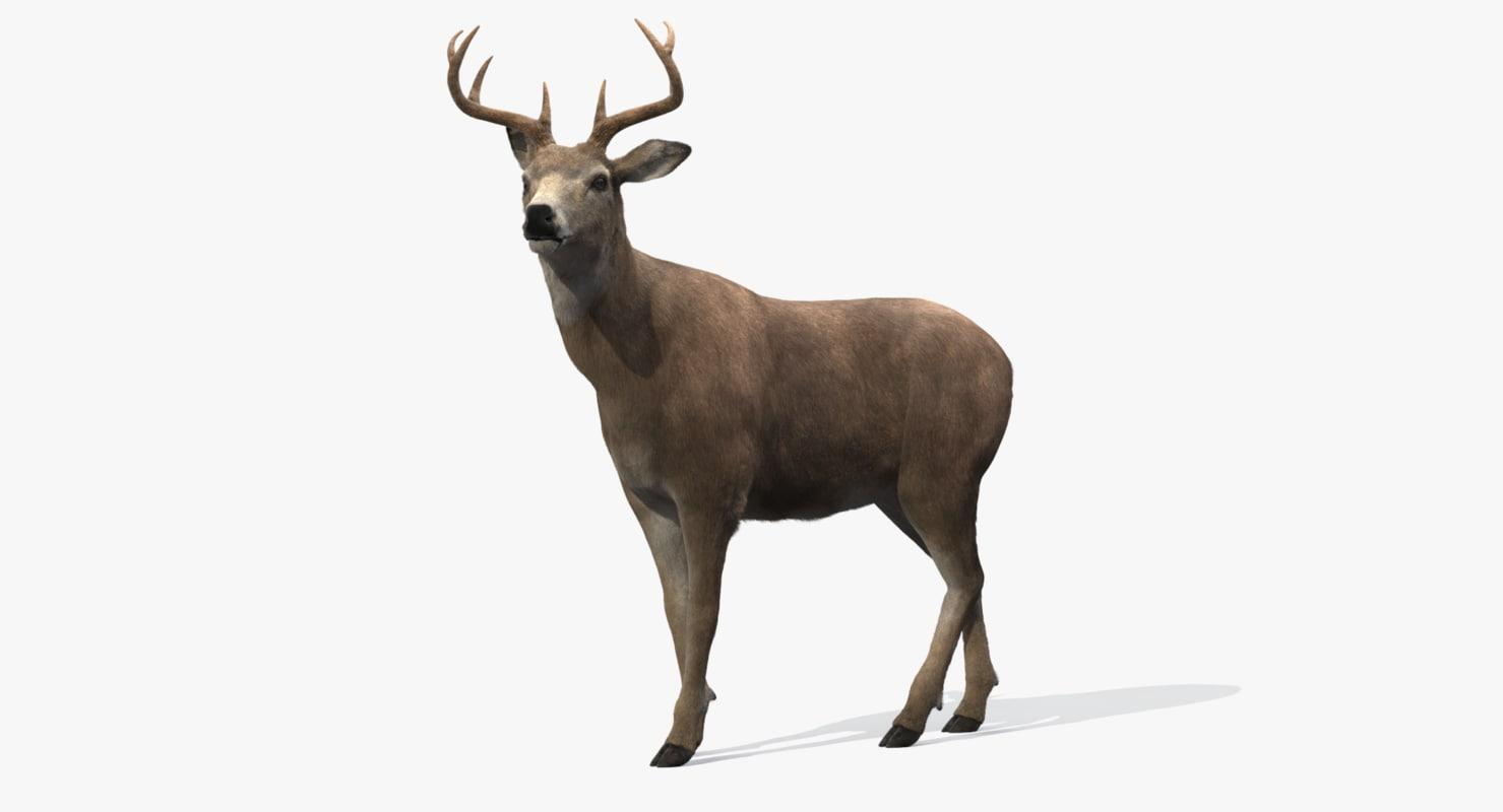 deer rigged fur 3d model