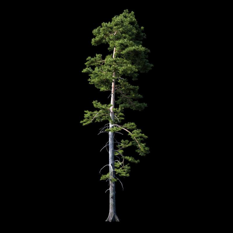 photorealistic pine tree 3d max
