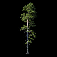 photorealistic pine tree 3d max
