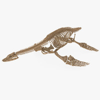 plesiosaurus skeleton 3d model