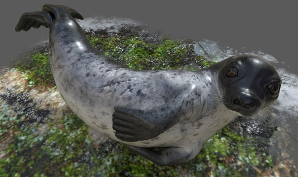 realistic common rigged seal 3d obj
