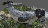 3d realistic common rigged seal model