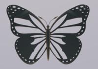 c4d butterfly