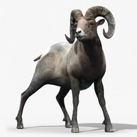 3d model bighorn sheep rigged horns