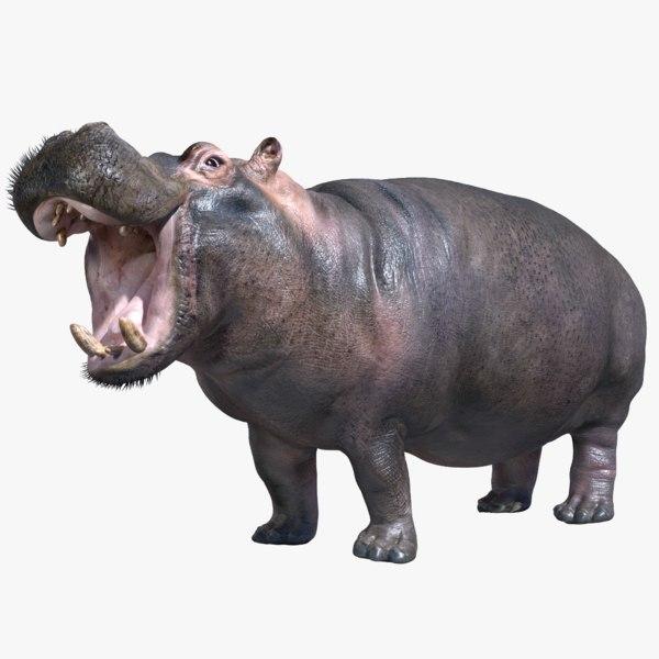 3d hippopotamus rigged model