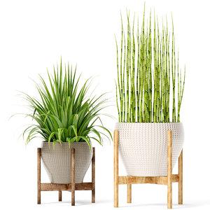 plants equisetum max