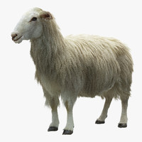 3d model sheep realistic