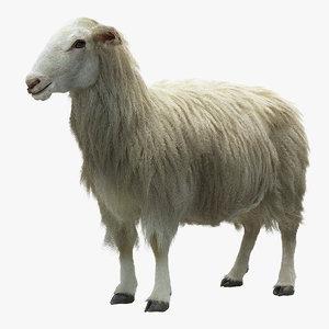 3d model sheep realistic