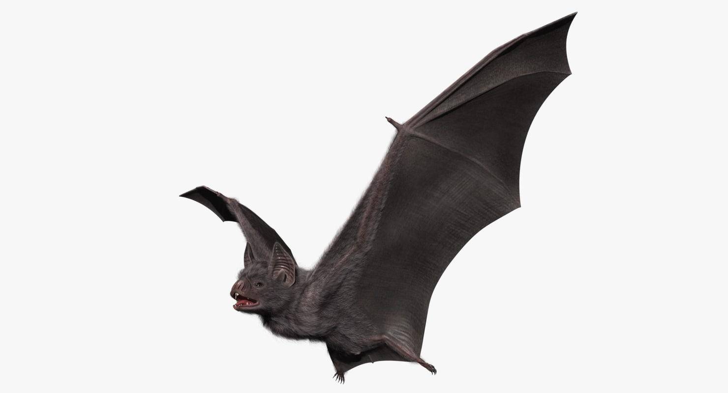 vampire bat 3d model