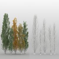 populus nigra trees 5 3d max
