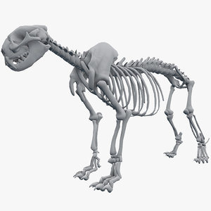 skeleton leopard 3d model