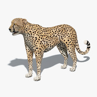 cheetah v-ray animation 3d obj