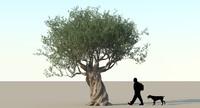 Olive Tree Type 06