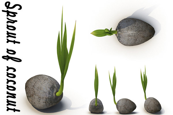 coconut sprout 3d model