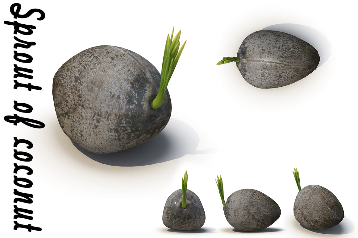 coconut sprout 3d max