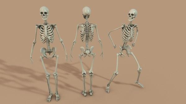 3d bone skeleton