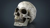 max skull jaw