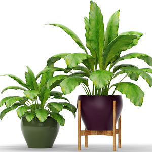 plants max