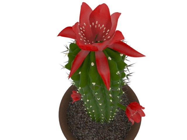 3d cactus flowers