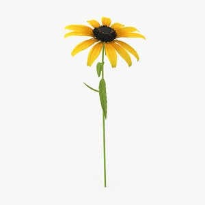 3d model black-eyed-susan---single-verticle