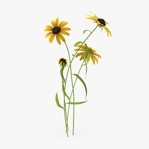 3d model black-eyed-susan---natural-group