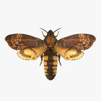 Deaths Head Hawkmoth with Fur Rigged