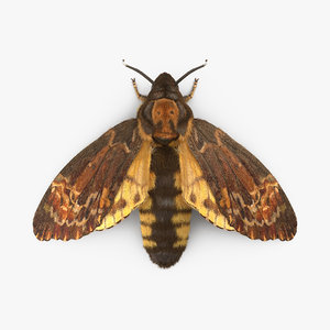 3d deaths head hawkmoth fur
