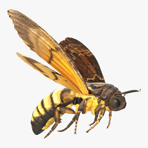 3d greater deaths head hawkmoth model