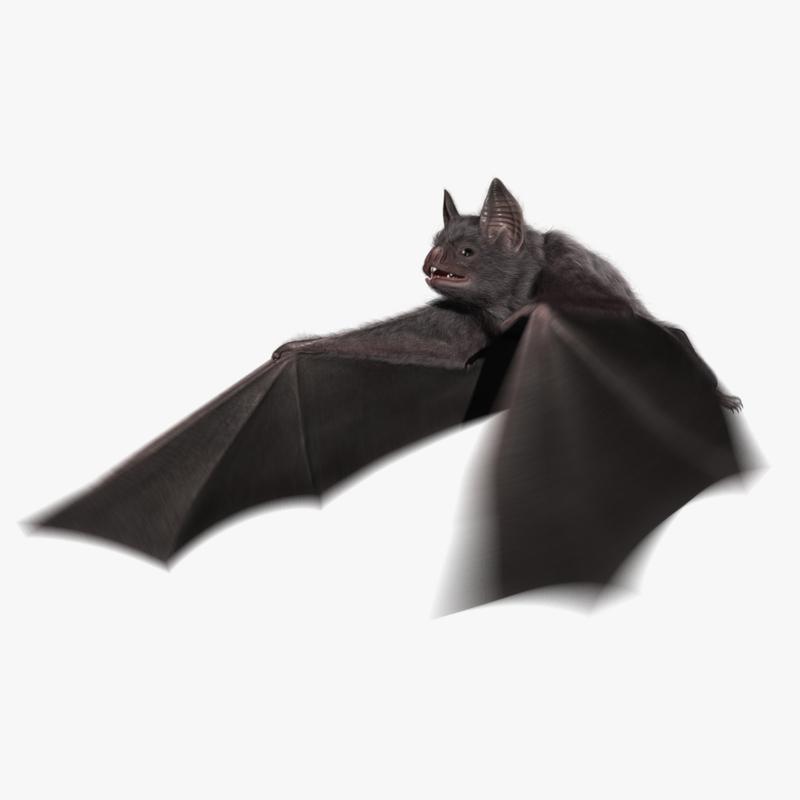 vampire bat animation obj
