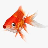 3d model of ryukin goldfish animation