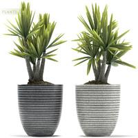 plants 88 3d model