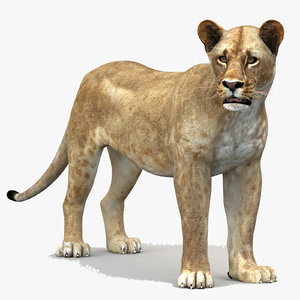 lioness 1 rigged lion 3d model