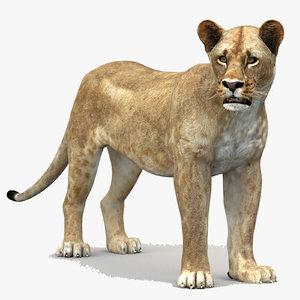 lioness 1 rigged lion 3d model