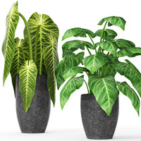 plants 3d fbx