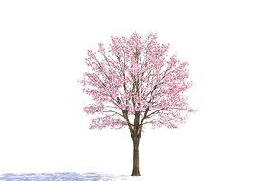 3d tree magnolia model