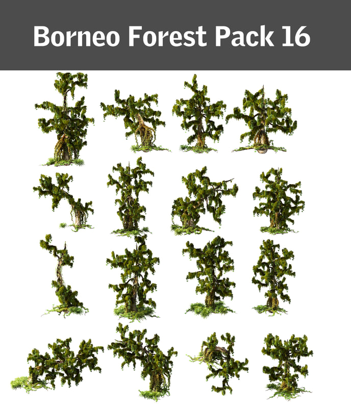 Borneo Forest Pack 16