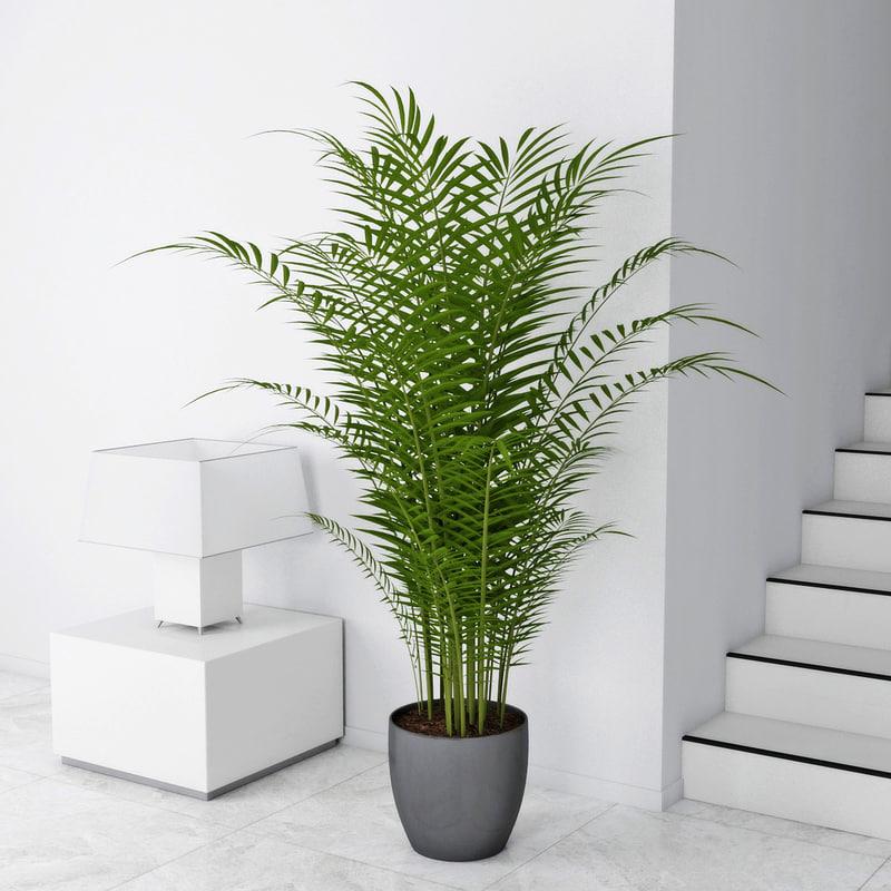3d model palm chamaedorea