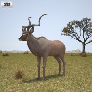 3d greater kudu