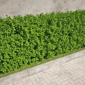 max hedging