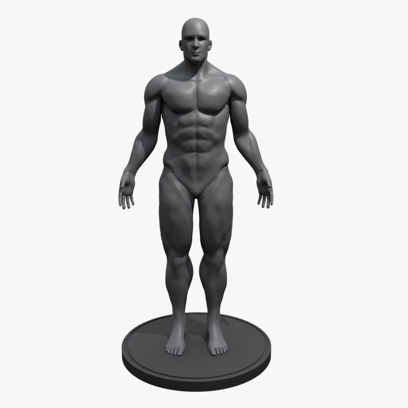 mannequin male anatomy 3d ma